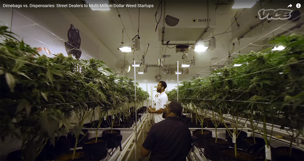 Capitol Compliance Management blog - Cannabis startups black owned businesses grow room legal industry marijuana weed 420 gas house